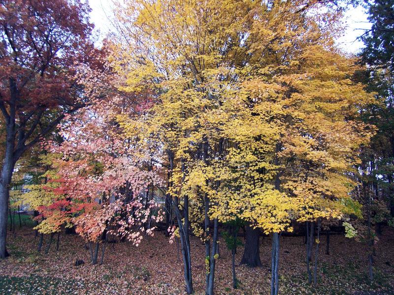 Leaves-falling