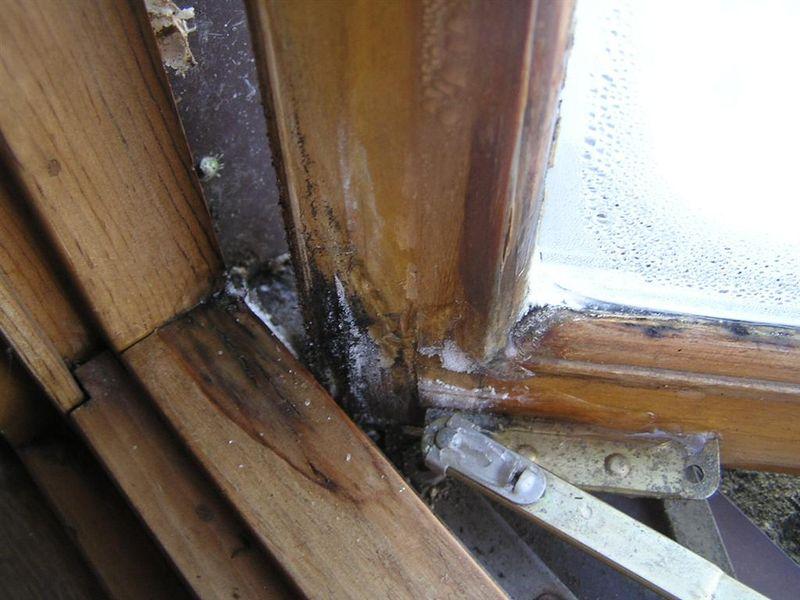 Moisture Damaged Window