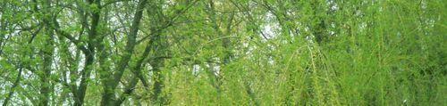 Springgreen1a