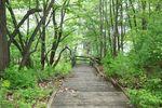 Parks-westwood nature center