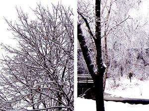 Snow-feb2012