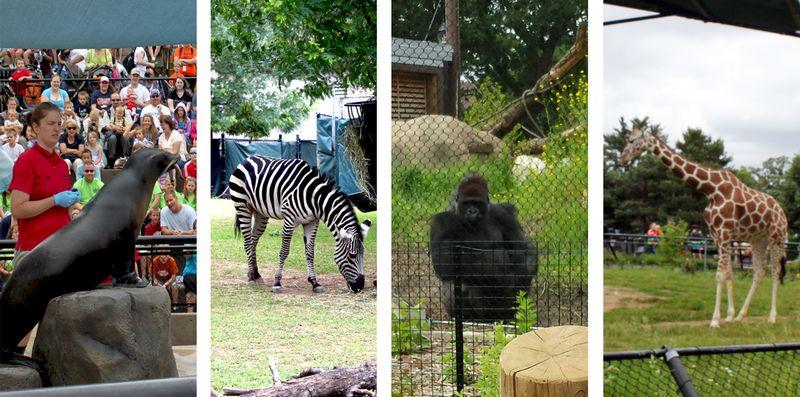 Como-zoo4