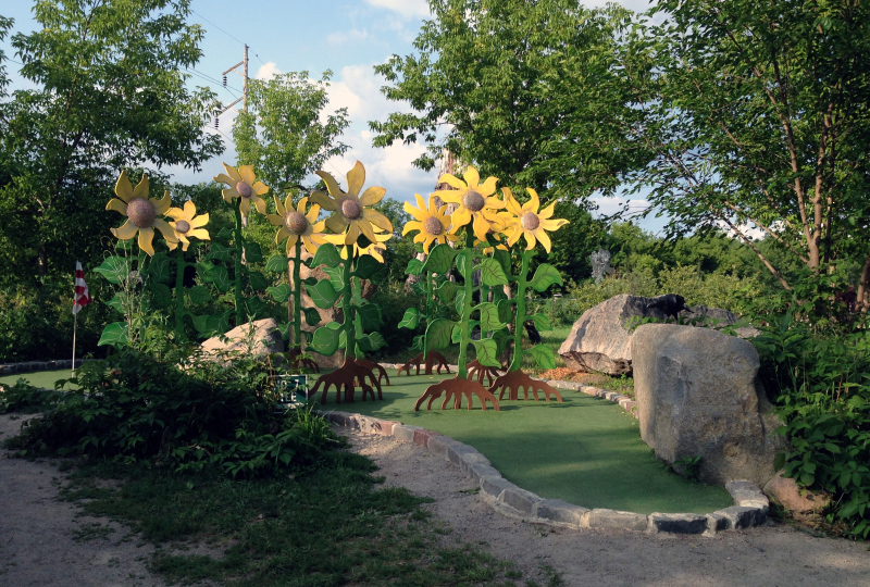 Big Stone Golf-sunflowers