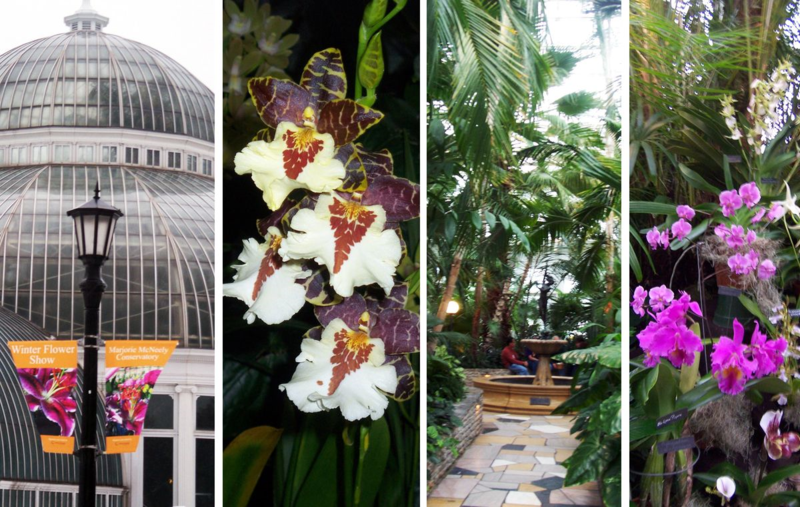 Como Conservatory Orchid Show