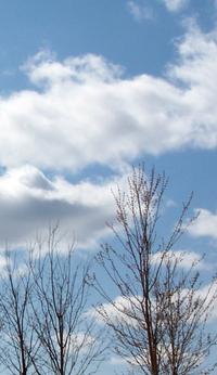 Cloudstrees1v